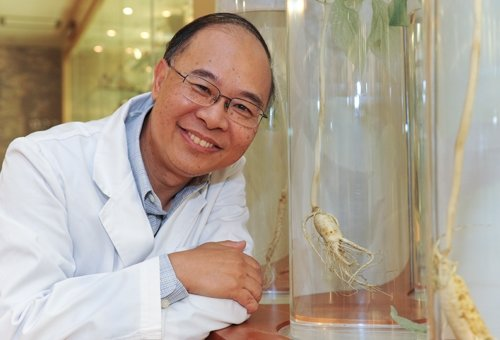 Professor Ricky Wong has spent more than 10 years studying the impact of the active constituents of ginseng on human cells, providing a solid ground to its potential application on healthcare treatments
