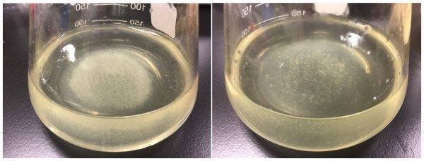 Skin squames suspended in medium (left) before degradation and (right) after degradation. The amount of skin squames (right) is significantly reduced.