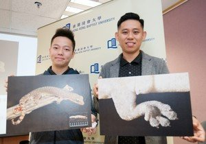 Biology scholar names new gecko species — Hong Kong Tree Gecko