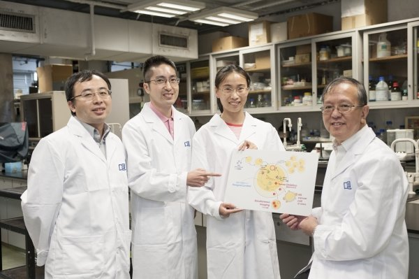 (From left) Dr Gary Wong, Dr Lung Hong-lok, Miss Jiang Lijun and Professor Mak Nai-ki and their collaborators are the first in the world to develop a compound to enhance the detection of tumour cells and inhibit their growth in mice, providing insights for the development of therapeutics for use against EBV-associated diseases.