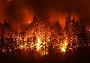 Investigation on wildfires