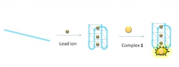 A schematic diagram of the luminescent switch-on assay that monitors the presence of lead ions using a G-quadruplex-selective probe.